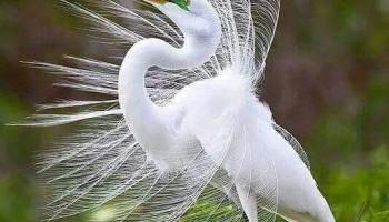 Вебинар «Не увязайте в своих потерях»