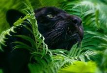Вебинар на тему воплощений в теле животного
