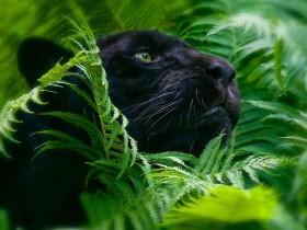 Открытый вебинар Юлии Серебрянниковой на тему воплощений в теле животного